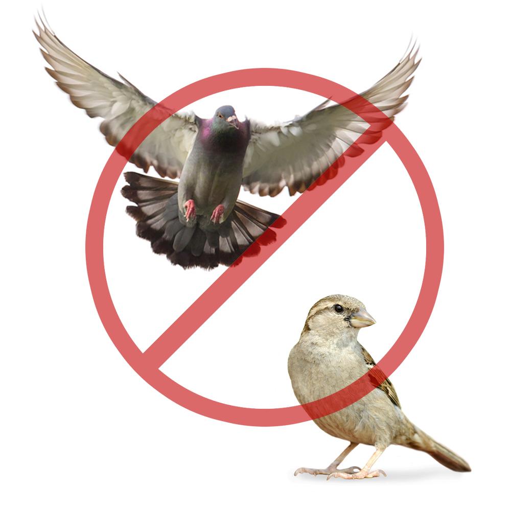 Schutz gegen Vögel / Tauben